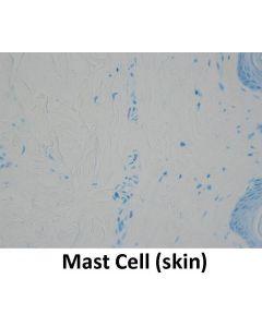 Control Slides, Mast Cell, Box/20 slides, plus 2 pre-stained slide Tissue: Skin  Stain: Toluidine Blue Item # 10-CS-MC20